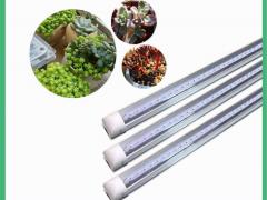 叶菜植物灯led全光谱T8一体化植物灯