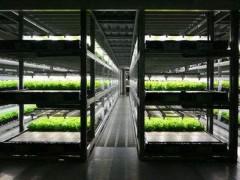 设施园艺照明的电光源发展历程