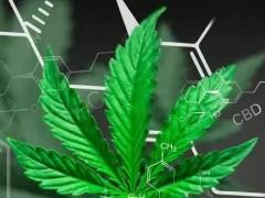 工业大麻CBD的功效