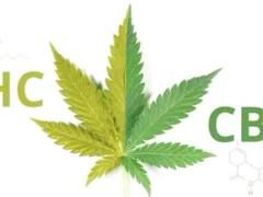 工业大麻CBD的医疗用途(上)