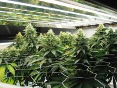 led植物补光灯的市场应用