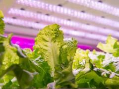 瑞典植物工厂蔬菜立体种植案例