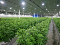 温室种植与植物补光灯的结合,最大化利用土地资源