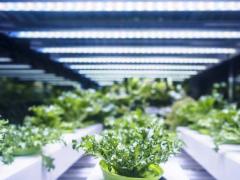 什么是植物生长灯?