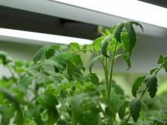 光照在植物生长发育各个阶段的作用,植物补光灯的实际应用