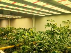 光强对植物光合作用的影响
