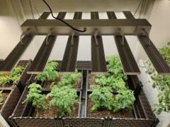 植物补光灯如何在蔬菜大棚种植?