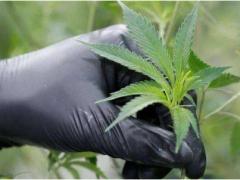 工业大麻对环境的影响(上)