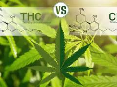 低THC工业大麻会是大麻的下一个大趋势吗