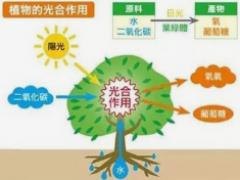植物补光灯环境因素对光合机构的影响