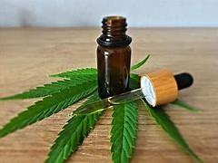 工业大麻产业的障碍不是政策而是它