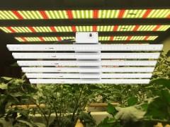 工业大麻植物灯 智能调光