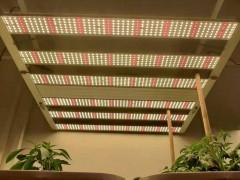 北美大麻种植专用灯
