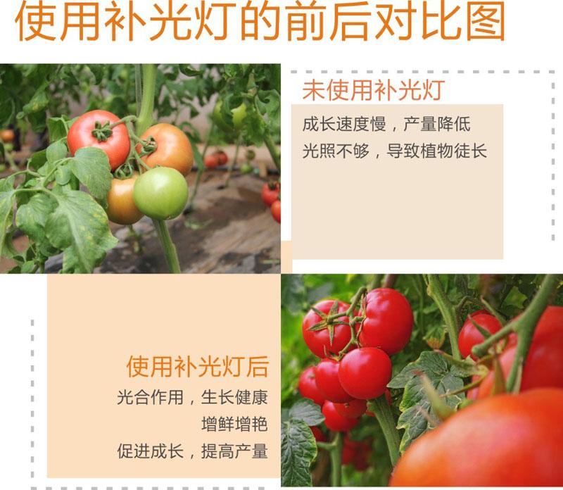 西红柿-1