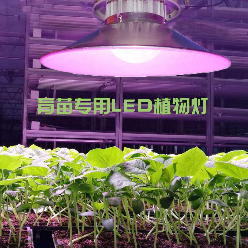 大棚植物补光灯
