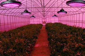 LED植物灯系列