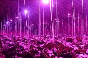 植物照明工程