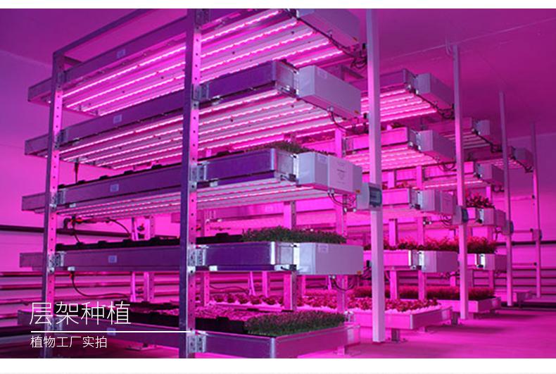 叶菜植物灯led全光谱