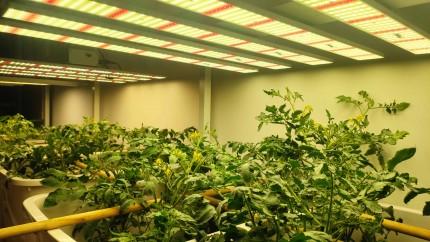伟照业植物补光灯
