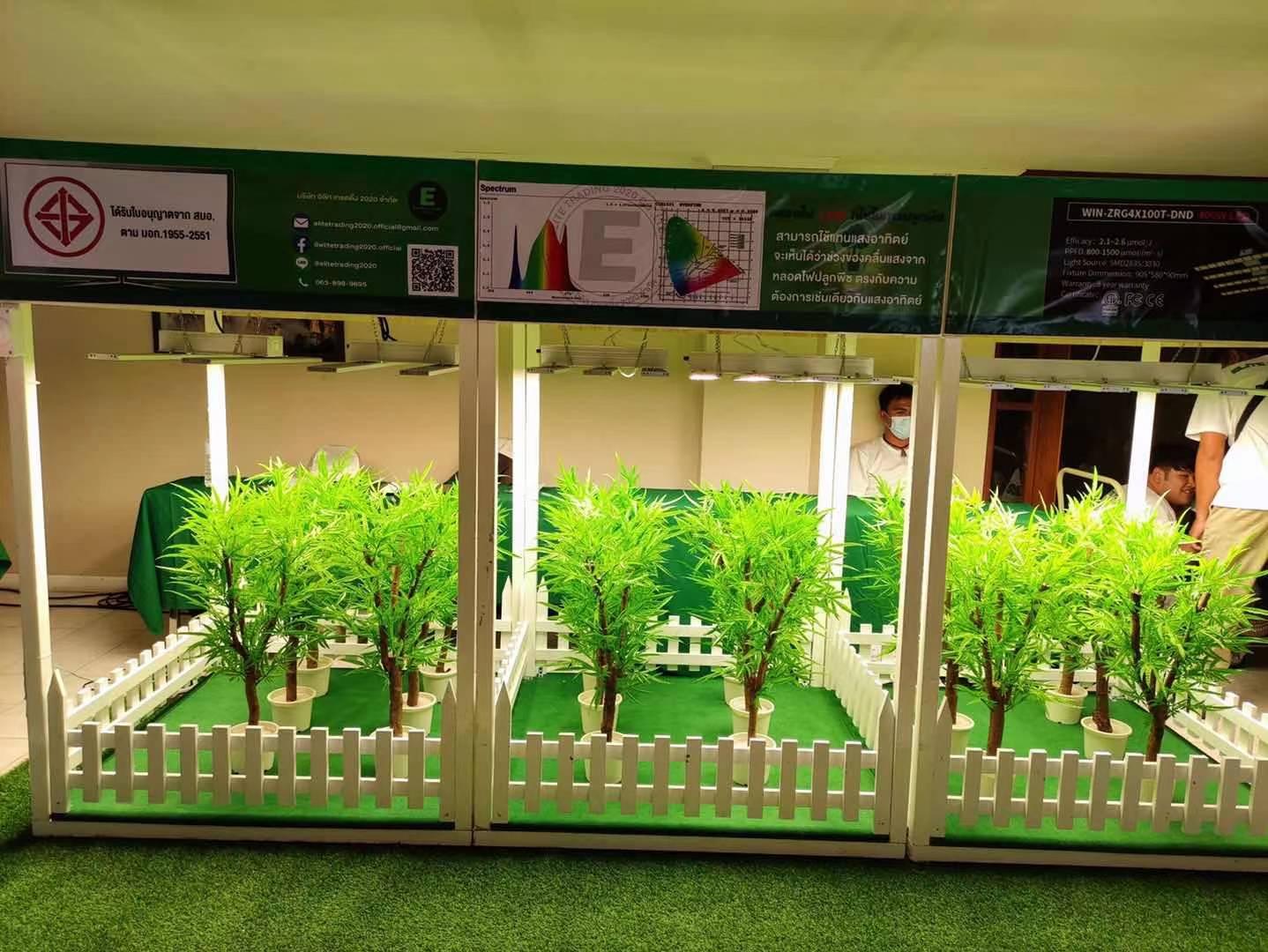 伟照业植物灯出现在泰国工业大麻展会
